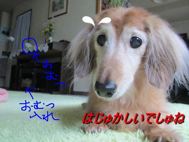 2012.6、15おむつ