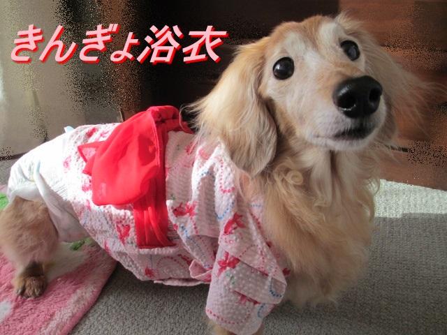 金魚浴衣YUYUさんから