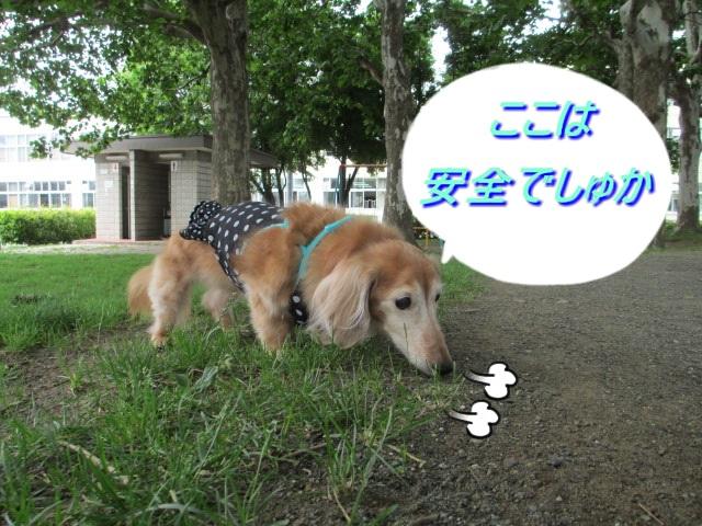 2013.8.さんぽ4