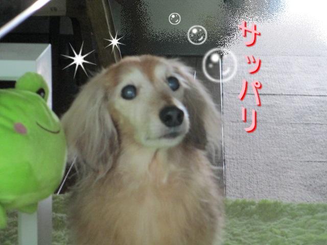 IMG_0611.jpg