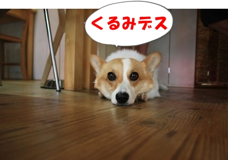 -1IMG_7224-1.jpg