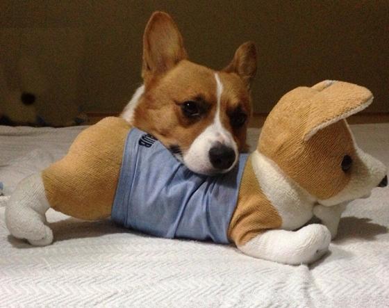 コギぐるみアゴ枕