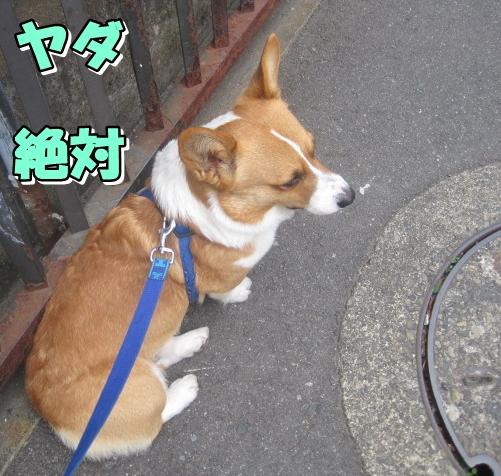 IMG_0407.jpg