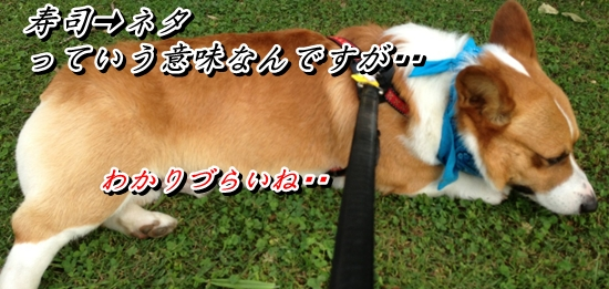 IMG_1619_20130713210106.jpg