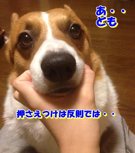 IMG_2404_20131119004005cf4.jpg