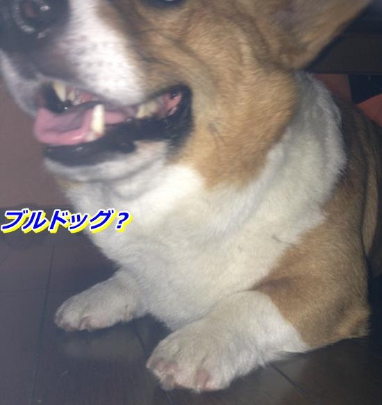 IMG_4885_20130521231601.jpg