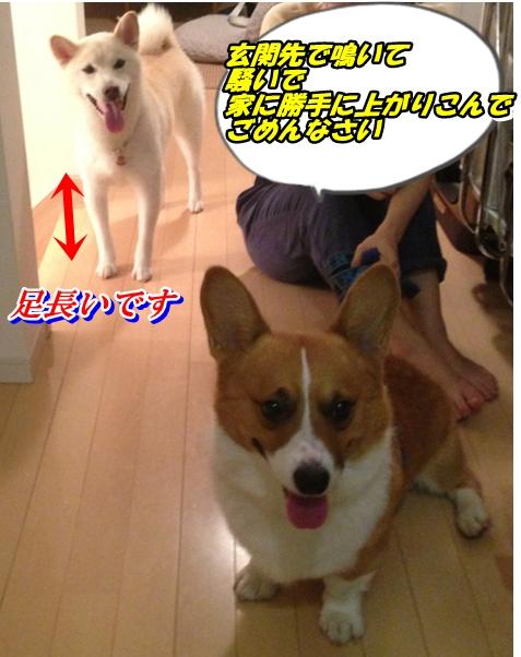 IMG_4903_20130915230026404.jpg