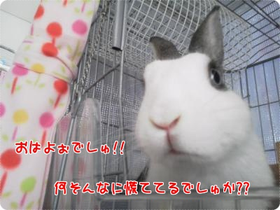 Enjoy Rabbit Life 当日の朝2