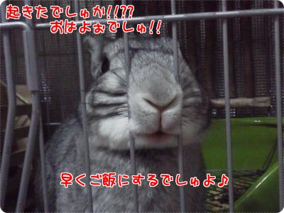 Enjoy Rabbit Life 当日の朝!!