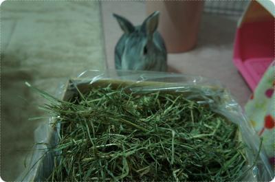 ラビィ牧草1