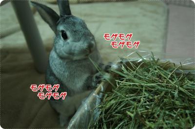 ラビィ牧草5