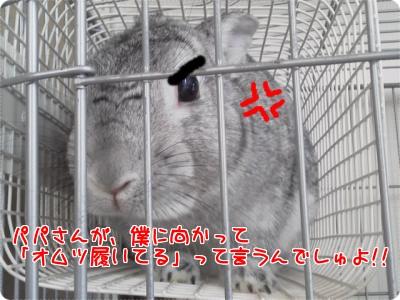 ラビィおむつ1