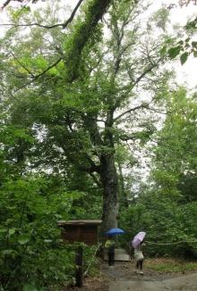 夫が撮った写真。これだと木の大きさが分かりやすいわね。