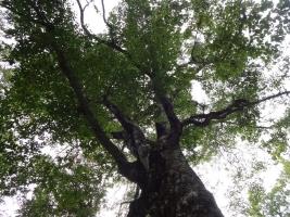 9:17 下から見たマザーツリー