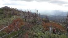 16:02 山頂付近は、少しだけ紅葉の気配が。