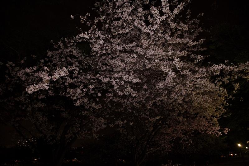 闇の中いちばん咲いて待っています