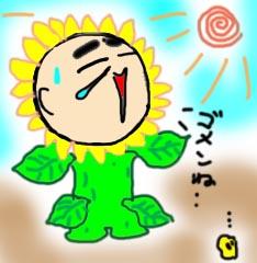 himawari-.jpg