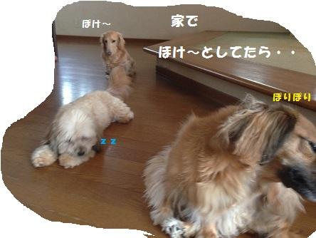 ほけ~IMG_2390[1]