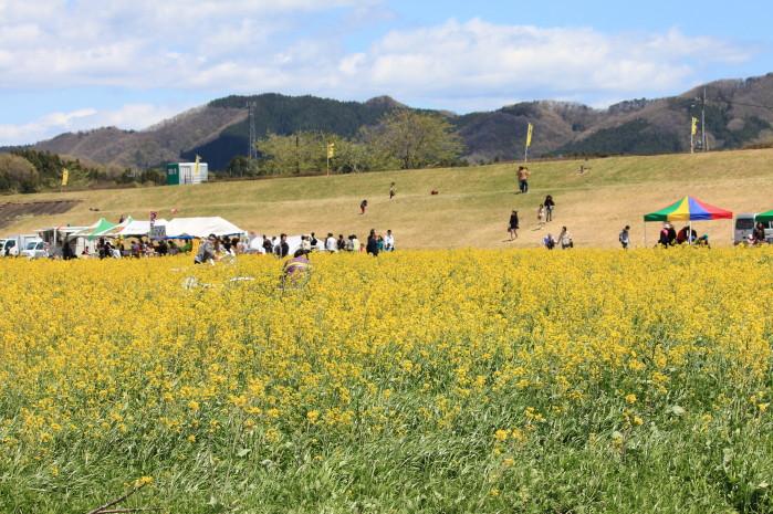 菜の花IMG_4198_1
