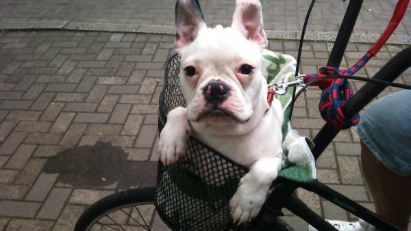 初めて自転車に乗る