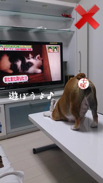 テレビの見方5
