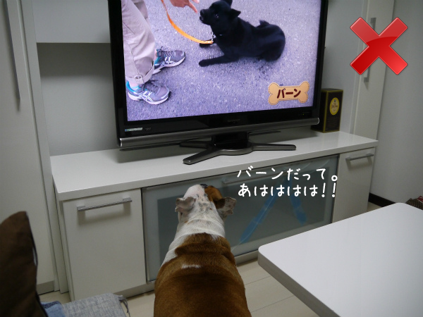 テレビの見方1