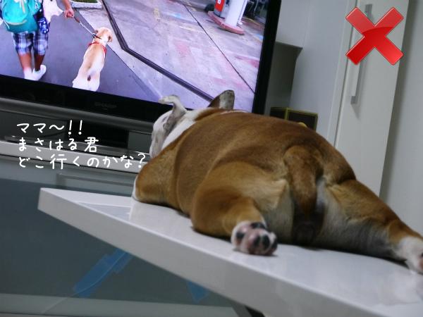 テレビの見方2