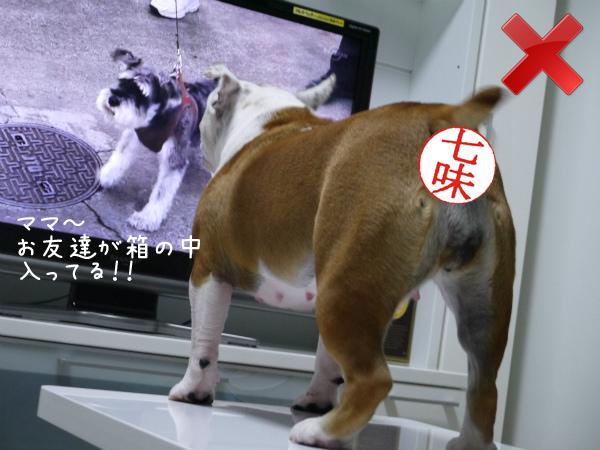 テレビの見方4
