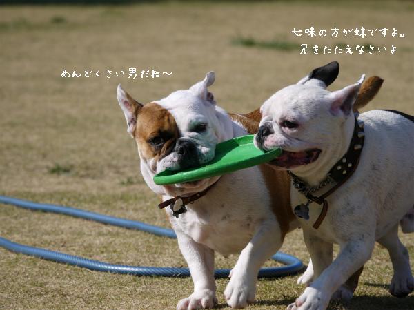 Fetch3