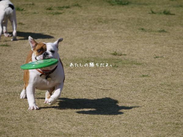 Fetch4