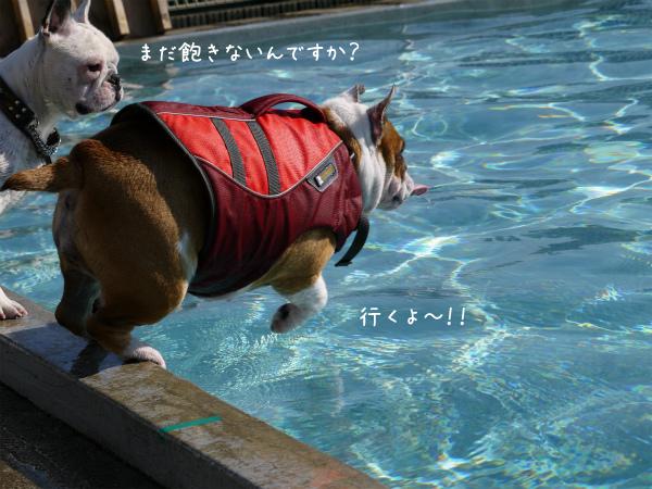 Fetch13