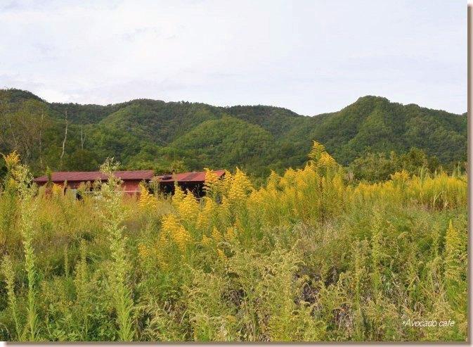 小屋とセイタカアワダチソウ