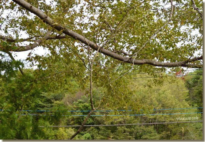 枯れ枝のブランコ