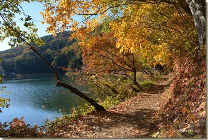湖畔の道2