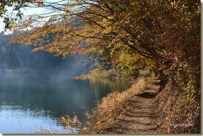湖畔の道3