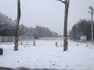 14 2 8 Arena Pic 1 Snow
