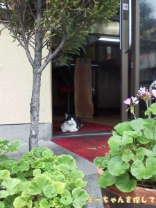 近所のラーメン屋で見かける猫