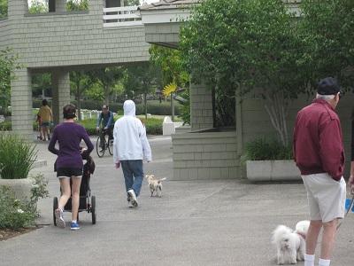 朝の散歩を楽しむ人々