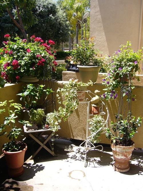 パティオの植物