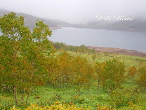 霧の野反湖
