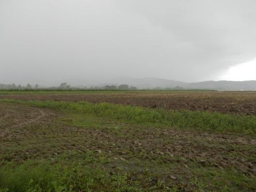 20140917_雨が降る降る