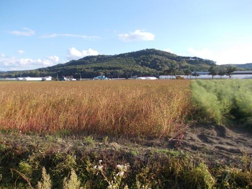 20140921_ソバ刈り始まる1