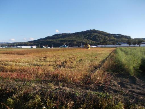20140921_ソバ刈り始まる3