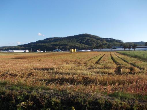 20140921_ソバ刈り始まる6