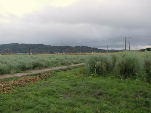 20140925_午後は雨