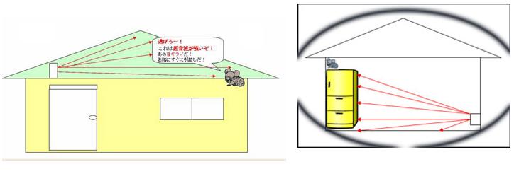 超音波実験画像2