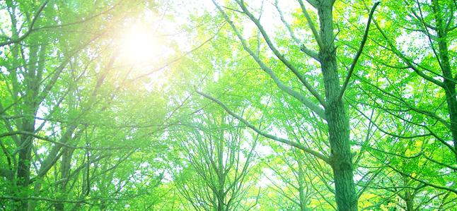 森林木漏れ日