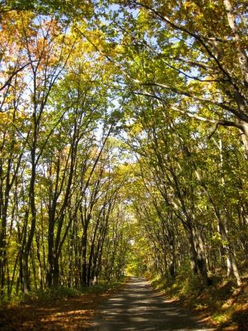 森の道(昨年秋)