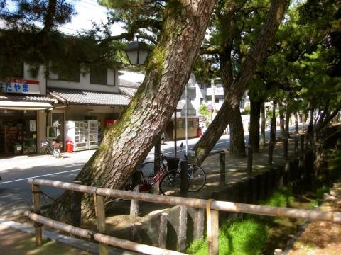 醍醐寺の前の道1016