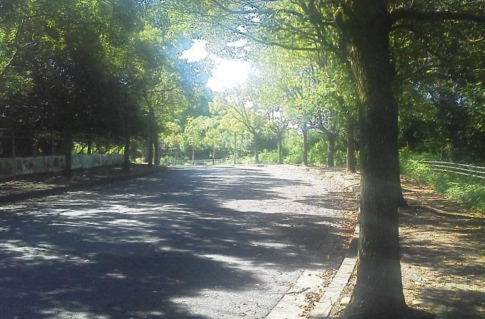 天理大学敷地内(北門から撮影)